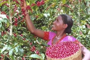 ec-091227 etiopia caffe2